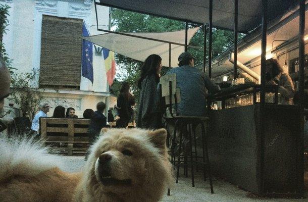 Lokal Bar Bucharest