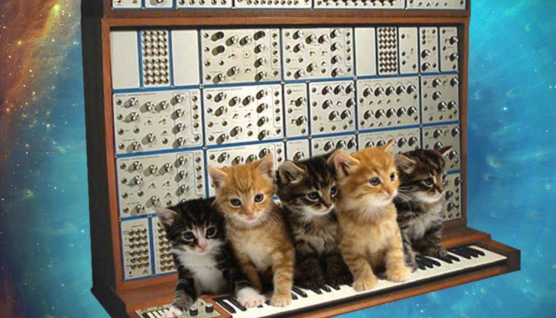 modular cats