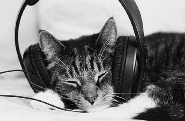 cat-with-headphones-e1458783711313_1024