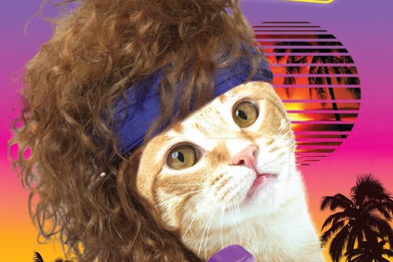 Image result for 80s cat