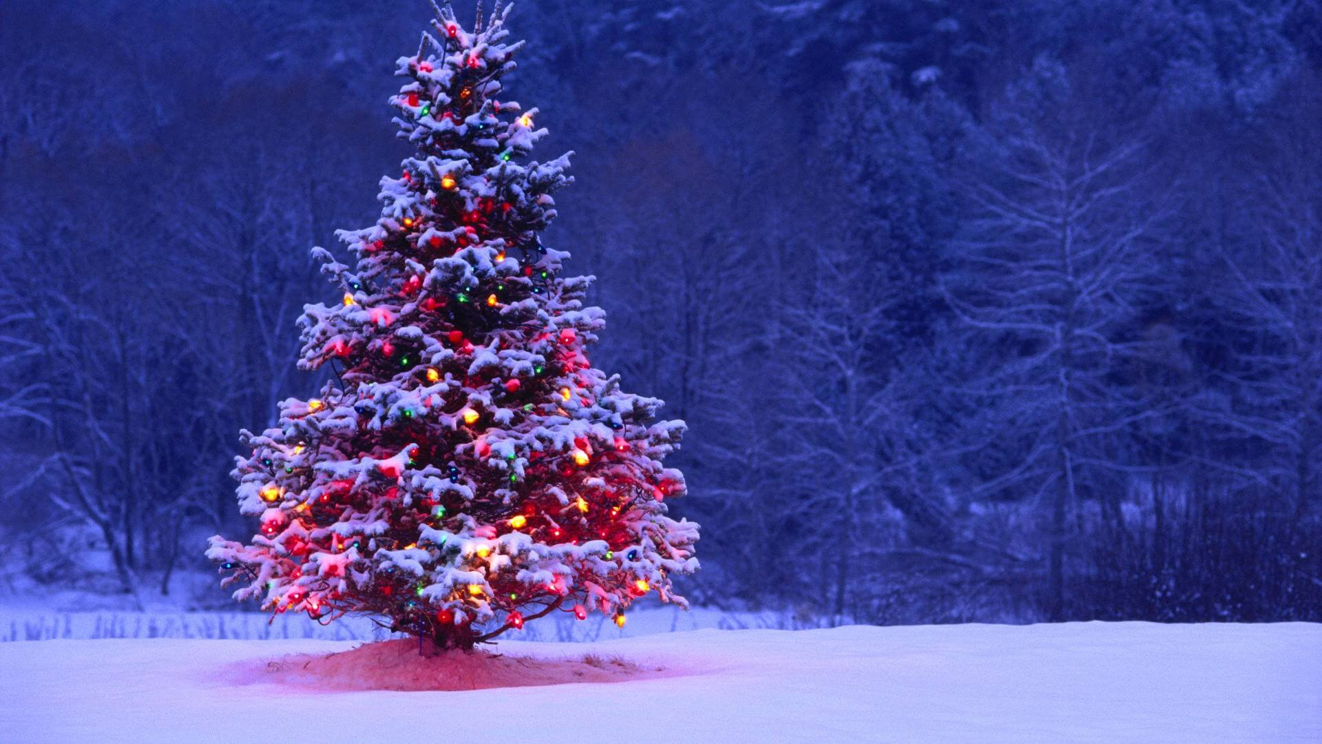 Could This Christmas Tree Be The Next Big MIDI Controller? – Telekom ...