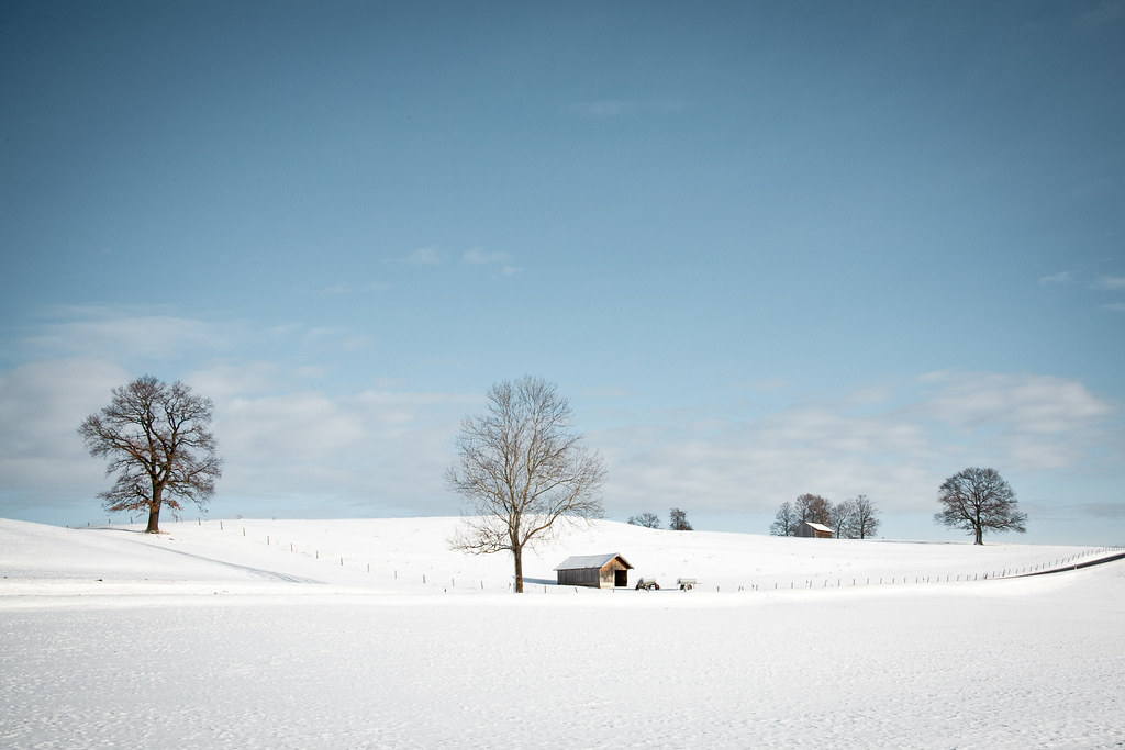 Șapte mixuri de iarnă
